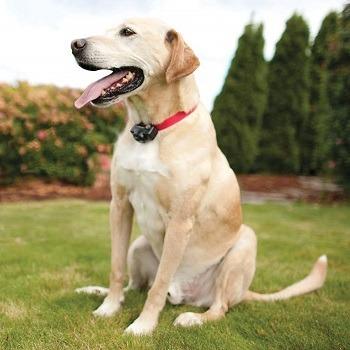 Best GPS Dog Fence 2020