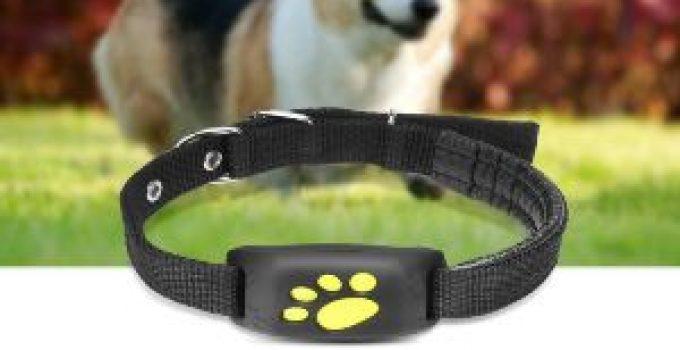 GPS Wireless dog Fence Reviews 2020