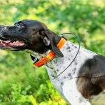 10 Best Dog GPS Collar 2020 - [Buyer's Guide]