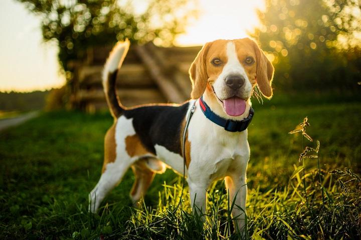 Best GPS Dog Fences Reviews Black Friday 2021