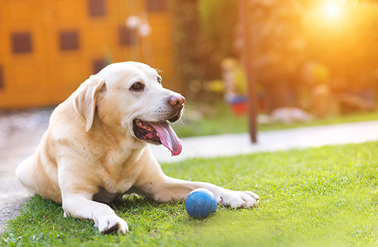 Best Top GPS Dog Fence Black Friday 2021